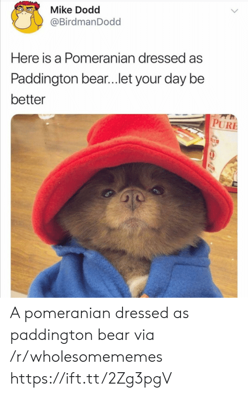 Bear, Pomeranian, and Via: Mike Dodd  @BirdmanDodd  Here is a Pomeranian dressed as  Paddington bear...let your day be  better  PURE A pomeranian dressed as paddington bear via /r/wholesomememes https://ift.tt/2Zg3pgV