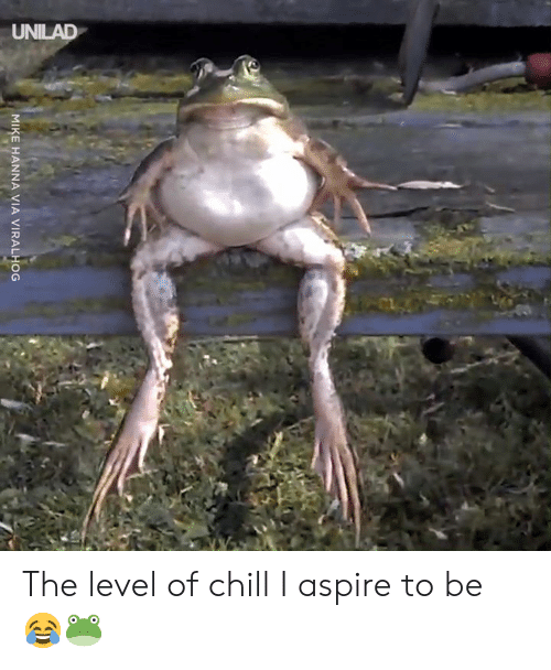 Chill, Dank, and 🤖: MIKE HANNA VIA VIRALHOG The level of chill I aspire to be 😂🐸