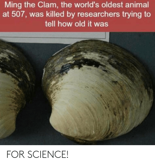 Facepalm, Animal, and Science: Ming the Clam, the world's oldest animal  at 507, was killed by researchers trying to  tell how old it was FOR SCIENCE!