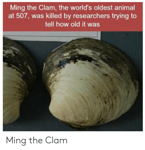 Animal, Old, and How: Ming the Clam, the world's oldest animal  at 507, was killed by researchers trying to  tell how old it was Ming the Clam