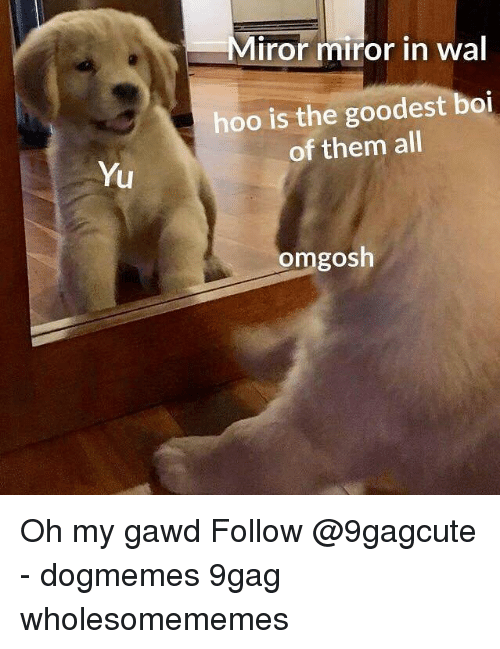 Gawd: Miror miror in wal  hoo is the goodest boi  of them all  Yu  omgosh Oh my gawd Follow @9gagcute - dogmemes 9gag wholesomememes