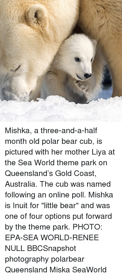 "SeaWorld: Mishka, a three-and-a-half month old polar bear cub, is pictured with her mother Liya at the Sea World theme park on Queensland's Gold Coast, Australia. The cub was named following an online poll. Mishka is Inuit for ""little bear"" and was one of four options put forward by the theme park. PHOTO: EPA-SEA WORLD-RENEE NULL BBCSnapshot photography polarbear Queensland Miska SeaWorld"