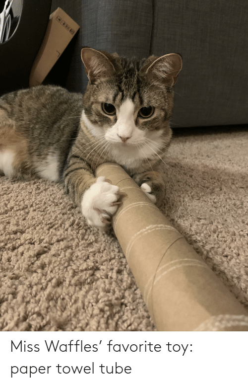 waffles: Miss Waffles' favorite toy: paper towel tube
