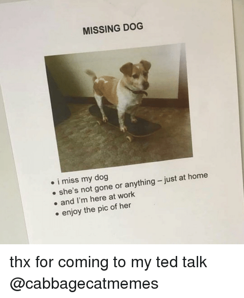 ted talk: MISSING DOG  . i miss my dog  e she's not gone or anything-just at home  . and I'm here at work  . enjoy the pic of her thx for coming to my ted talk @cabbagecatmemes