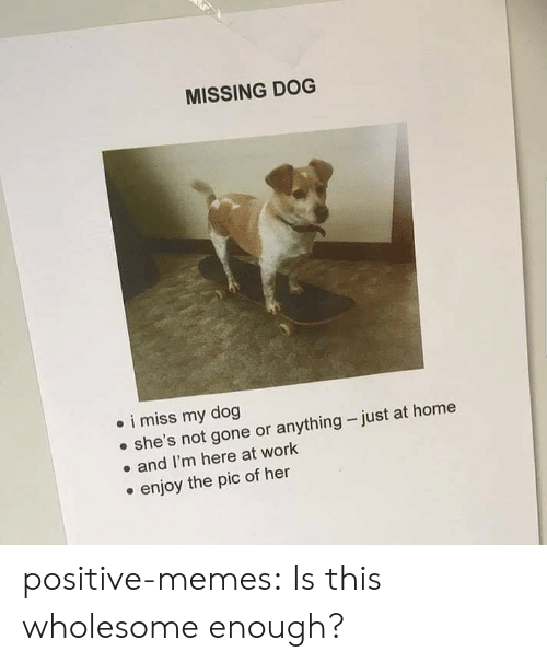 Memes, Tumblr, and Work: MISSING DOG  i miss my dog  she's not gone or anything just at home  and I'm here at work  enjoy the pic of her positive-memes:  Is this wholesome enough?
