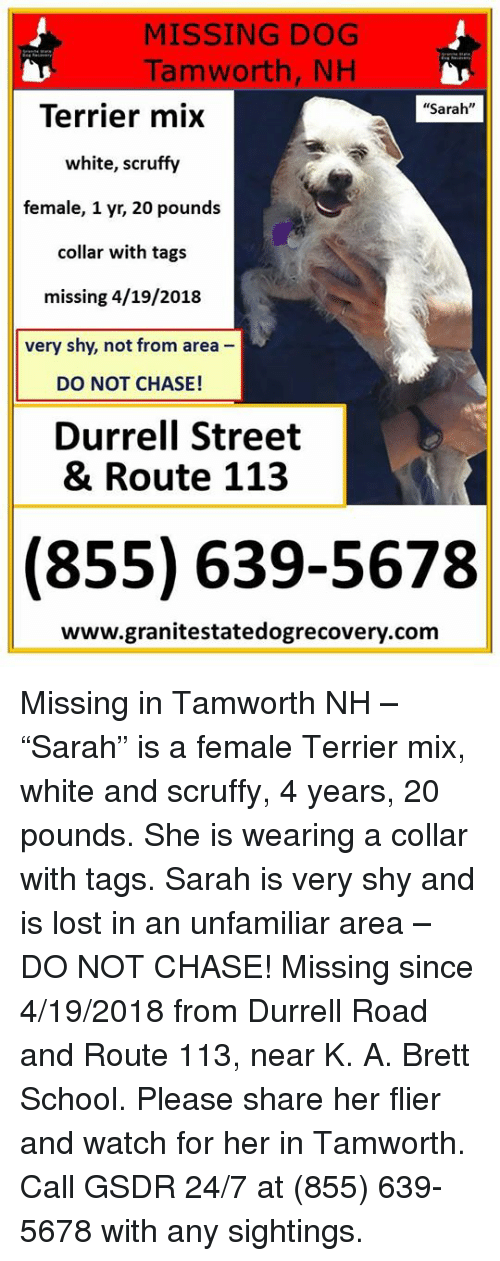 "Memes, School, and Lost: MISSING DOG  Tamworth, NH  ""Sarah""  Terrier mix  white, scruffy  female, 1 yr, 20 pounds  collar with tags  missing 4/19/2018  very shy, not from area -  DO NOT CHASE!  Durrell Street  & Route 113  (855) 639-5678  www.granitestatedogrecovery.com Missing in Tamworth NH – ""Sarah"" is a female Terrier mix, white and scruffy, 4 years, 20 pounds.  She is wearing a collar with tags.  Sarah is very shy and is lost in an unfamiliar area – DO NOT CHASE!  Missing since 4/19/2018 from Durrell Road and Route 113, near K. A. Brett School.  Please share her flier and watch for her in Tamworth. Call GSDR 24/7 at (855) 639-5678 with any sightings."