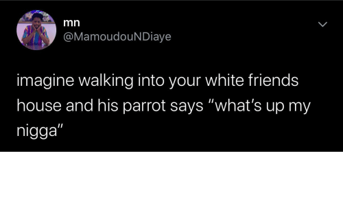 "walking: mn  @MamoudouNDiaye  imagine walking into your white friends  house and his parrot says ""what's up my  nigga"""