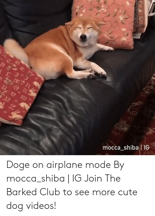 Doge: mocca shiba IIG Doge on airplane mode By mocca_shiba | IG  Join The Barked Club to see more cute dog videos!