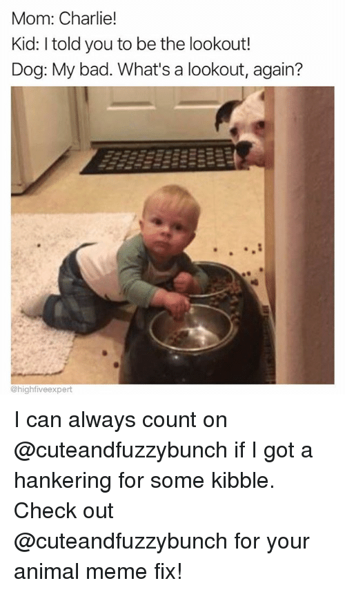 Bad, Charlie, and Meme: Mom: Charlie!  Kid: I told you to be the lookout!  Dog: My bad. What's a lookout, again?  0  @highfiveexpert I can always count on @cuteandfuzzybunch if I got a hankering for some kibble. Check out @cuteandfuzzybunch for your animal meme fix!