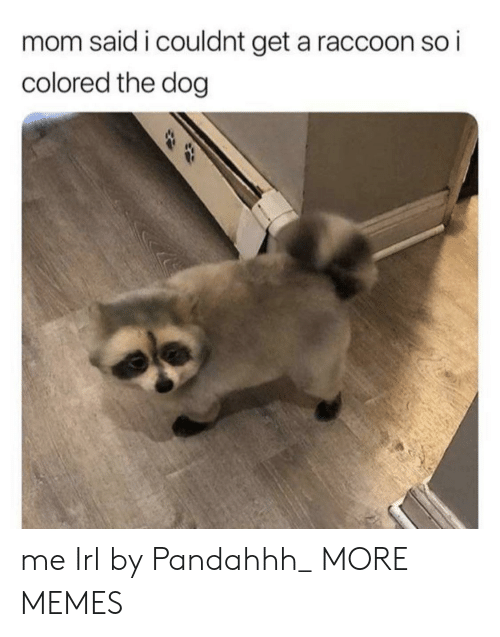 Dank, Memes, and Target: mom said i couldnt get a raccoon so i  colored the dog me Irl by Pandahhh_ MORE MEMES