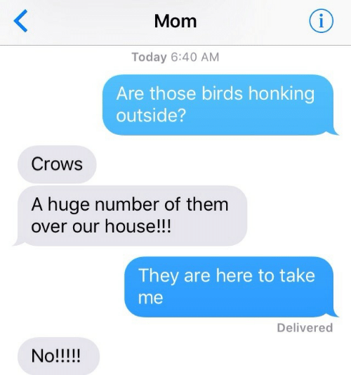 honking: Mom  Today 6:40 AM  Are those birds honking  outside?  Crows  A huge number of them  over our house!!!  They are here to take  me  Delivered