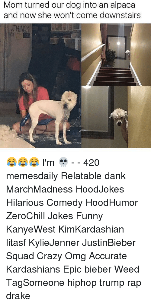 Relaters: Mom turned our dog into an alpaca  and now she won't come downstairs 😂😂😂 I'm 💀 - - 420 memesdaily Relatable dank MarchMadness HoodJokes Hilarious Comedy HoodHumor ZeroChill Jokes Funny KanyeWest KimKardashian litasf KylieJenner JustinBieber Squad Crazy Omg Accurate Kardashians Epic bieber Weed TagSomeone hiphop trump rap drake