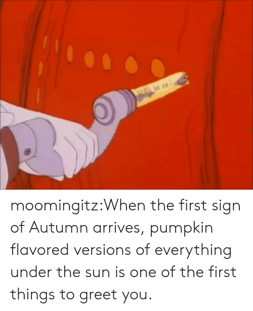 Tumblr, Blog, and Pumpkin: moomingitz:When the first sign of Autumn arrives, pumpkin flavored versions of everything under the sun is one of the first things to greet you.