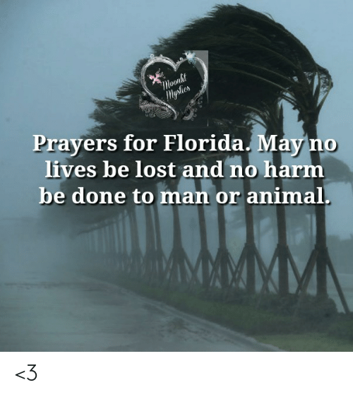 Memes, Lost, and Animal: Moonlit  lysties  Prayers for Florida. May no  lives be lost and no harm  be done to man or animal. <3