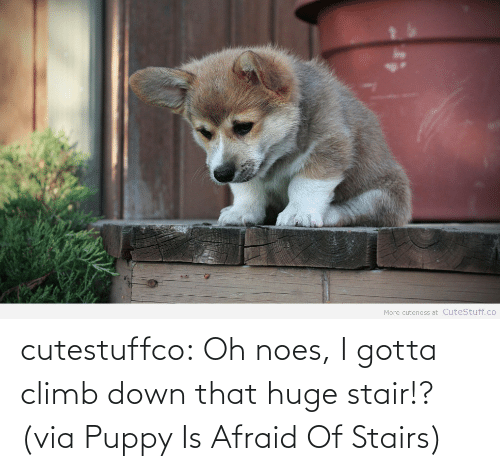 Noes: More cuteness at CuteStuff.co cutestuffco:  Oh noes, I gotta climb down that huge stair!?(via Puppy Is Afraid Of Stairs)