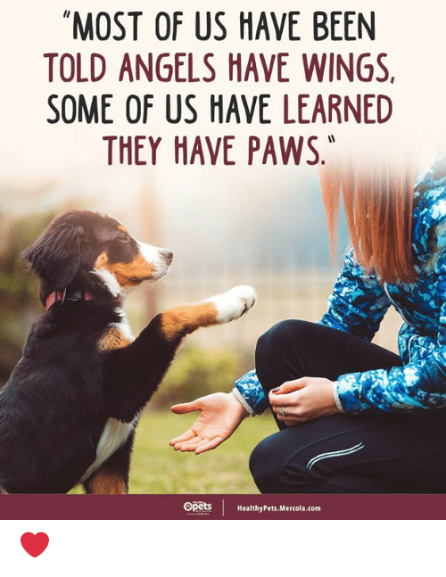 """Memes, Angels, and Wings: """"MOST OF US HAVE BEEN  TOLD ANGELS HAVE WINGS  SOME OF US HAVE LEARNED  THEY HAVE PAWS,  Opets  HealthyPets.Mercola.com ❤️"""
