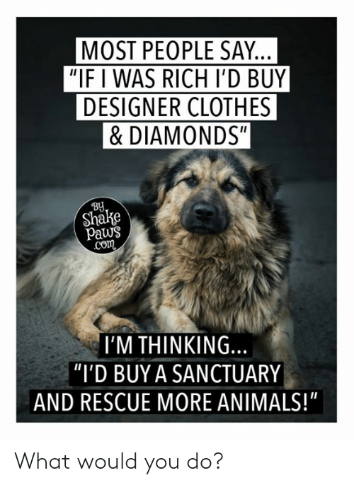 """Animals, Clothes, and Memes: MOST PEOPLE SAY.  """"IF I WAS RICH I'D BUY  DESIGNER CLOTHES  &DIAMONDS""""  BU  Shake  paws  co  I'M THINKING.  """"I'D BUY A SANCTUARY  AND RESCUE MORE ANIMALS!"""" What would you do?"""