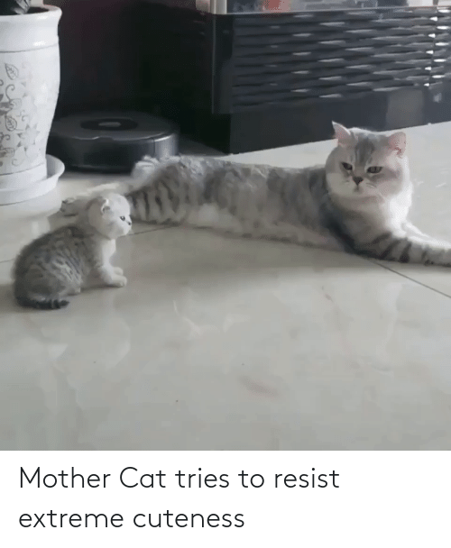 extreme: Mother Cat tries to resist extreme cuteness