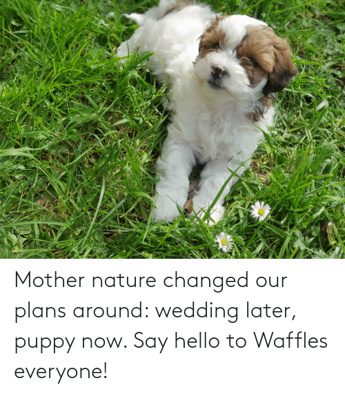waffles: Mother nature changed our plans around: wedding later, puppy now. Say hello to Waffles everyone!