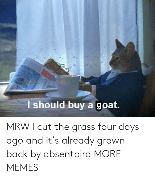 grass: MRW I cut the grass four days ago and it's already grown back by absentbird MORE MEMES