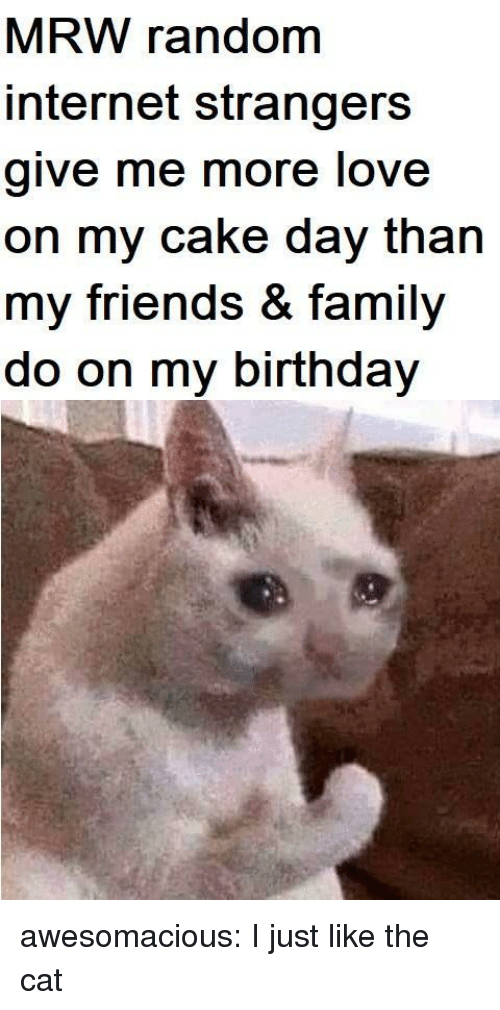 Birthday, Family, and Friends: MRW random  internet strangers  give me more love  on my cake day than  my friends & family  do on my birthday awesomacious:  I just like the cat