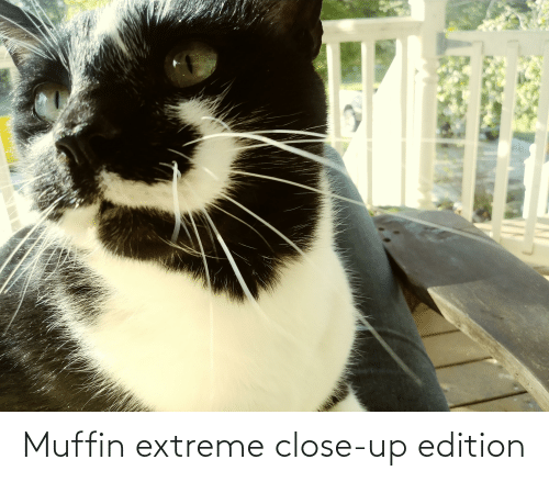extreme: Muffin extreme close-up edition