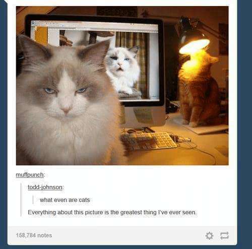 Cats, Picture, and Thing: muffounch  todd-johnson  what even are cats  Everything about this picture is the greatest thing I've ever seen.  158.784 notes