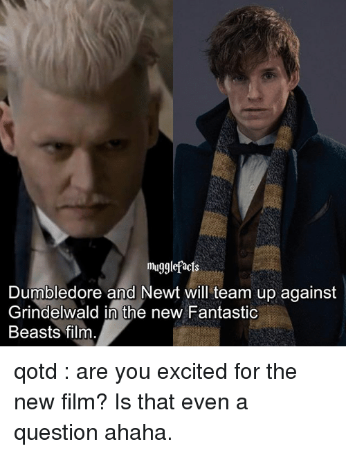 fantastic beasts: mugglefacts  Dumbledore and Newt will team up against  Grindelwald in the new Fantastic  Beasts film qotd : are you excited for the new film? Is that even a question ahaha.