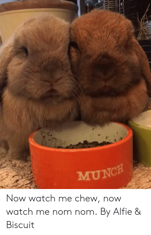 watch me: MUNCH Now watch me chew, now watch me nom nom.  By Alfie & Biscuit