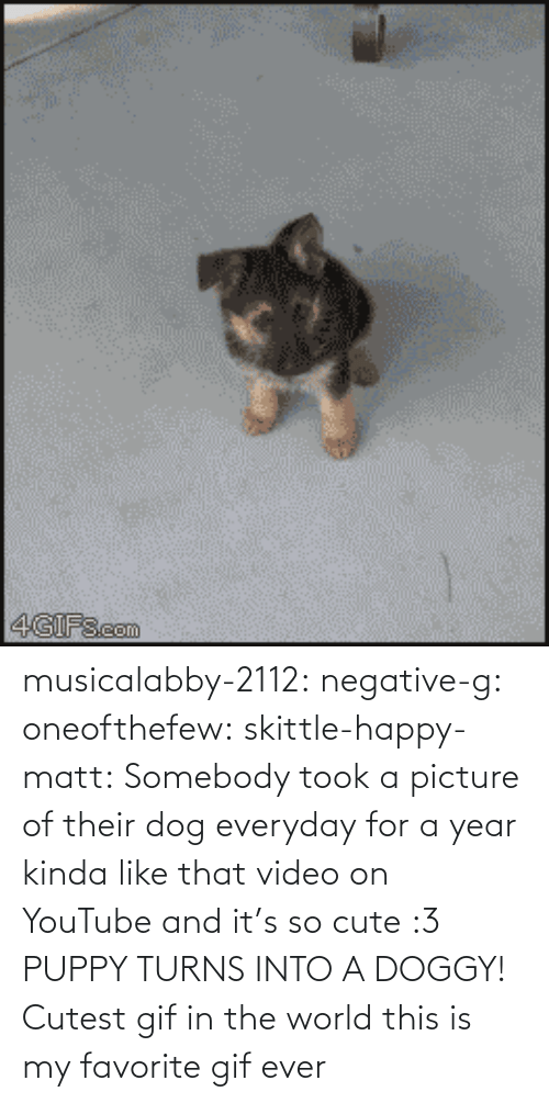 Favorite Gif: musicalabby-2112:  negative-g:  oneofthefew:  skittle-happy-matt:  Somebody took a picture of their dog everyday for a year kinda like that video on YouTube and it's so cute :3  PUPPY TURNS INTO A DOGGY!  Cutest gif in the world  this is my favorite gif ever