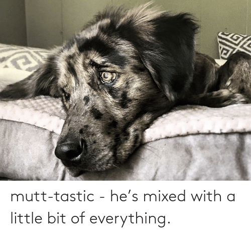 Little Bit: mutt-tastic - he's mixed with a little bit of everything.