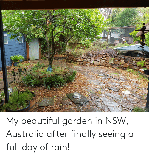 seeing: My beautiful garden in NSW, Australia after finally seeing a full day of rain!