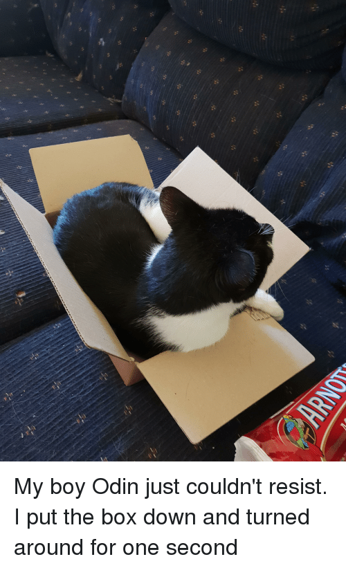 Odin: My boy Odin just couldn't resist. I put the box down and turned around for one second