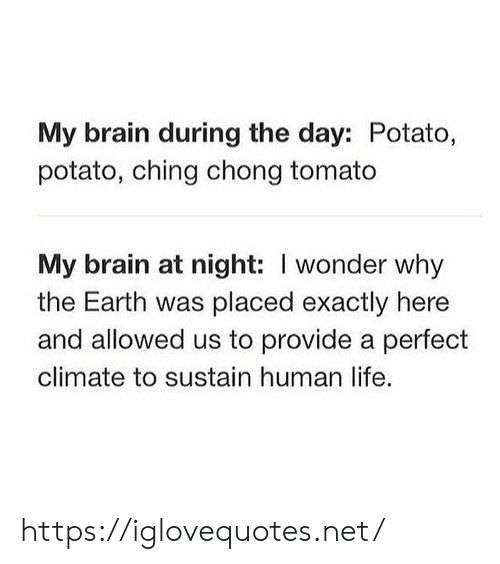 chong: My brain during the day: Potato,  potato, ching chong tomato  My brain at night: I wonder why  the Earth was placed exactly here  and allowed us to provide a perfect  climate to sustain human life. https://iglovequotes.net/