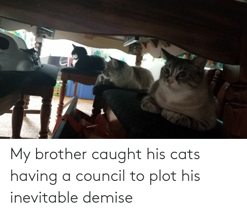my brother: My brother caught his cats having a council to plot his inevitable demise