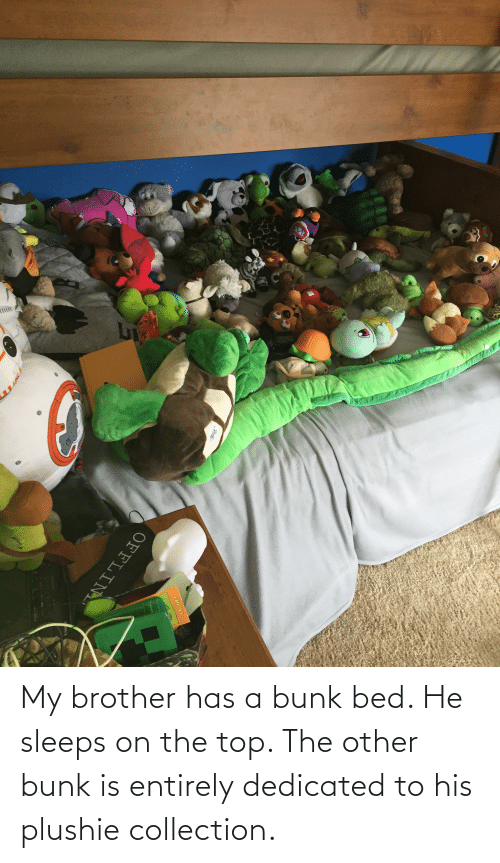 dedicated: My brother has a bunk bed. He sleeps on the top. The other bunk is entirely dedicated to his plushie collection.