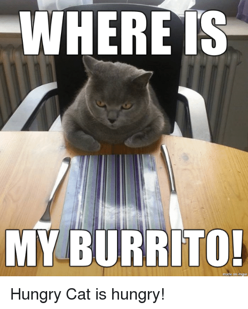 my burrito made on hungry cat is hungry 22329783 my burrito! made on hungry cat is hungry! funny meme on esmemes com