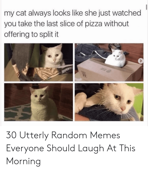 Utterly Random: my cat always looks like she just watched  you take the last slice of pizza without  offering to split it 30 Utterly Random Memes Everyone Should Laugh At This Morning
