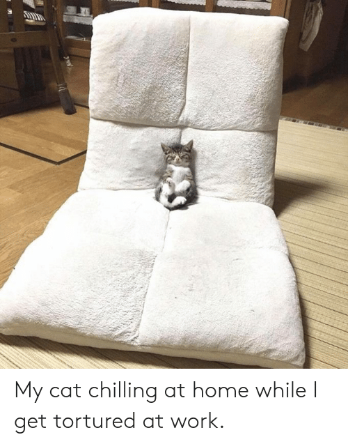 Dank, Work, and Home: My cat chilling at home while I get tortured at work.