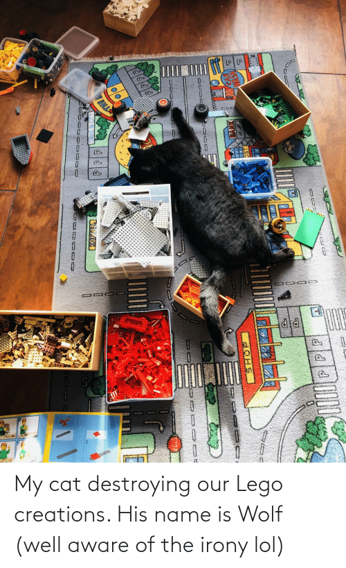 Irony: My cat destroying our Lego creations. His name is Wolf (well aware of the irony lol)