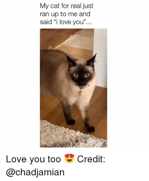 """Love, Memes, and I Love You: My cat for real just  ran up to me and  said """"i love you"""" Love you too 😍 Credit: @chadjamian"""