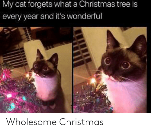 Tree: My cat forgets what a Christmas tree is  every year and it's wonderful Wholesome Christmas