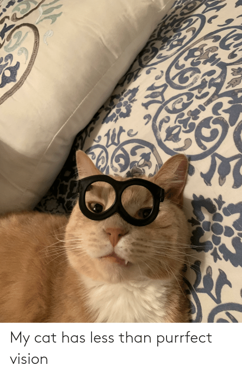 Vision: My cat has less than purrfect vision