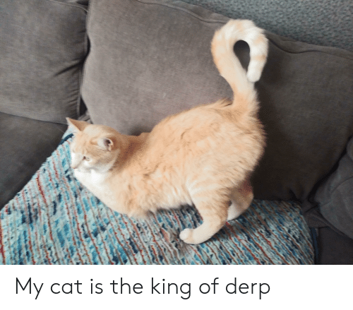 Cat, King, and Derp: My cat is the king of derp