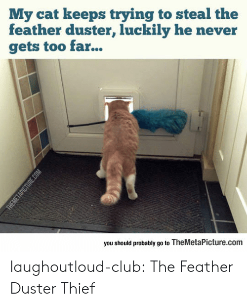 Club, Tumblr, and Blog: My cat keeps trying to steal the  feather duster, luckily he never  gets too far...  you should probably go to TheMetaPicture.com laughoutloud-club:  The Feather Duster Thief