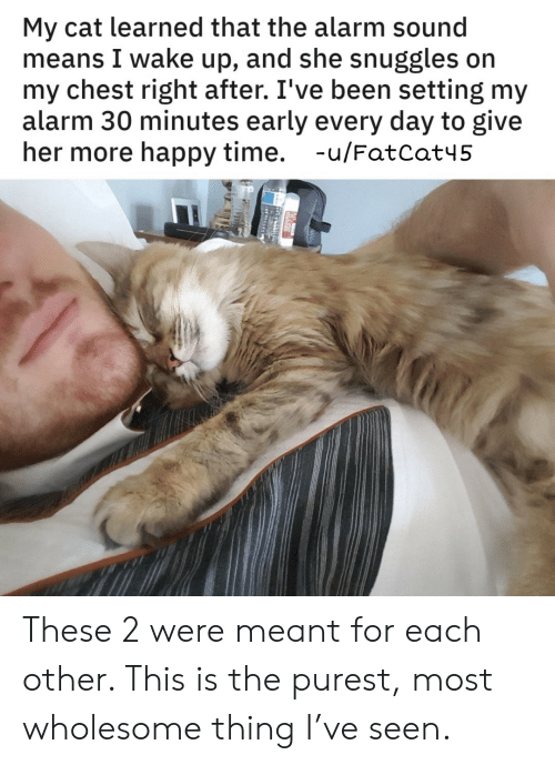 My Chest: My cat learned that the alarm sound  means I wake up, and she snuggles on  my chest right after. I've been setting my  alarm 30 minutes early every day to give  her more happy time. -u/FatCat45 These 2 were meant for each other. This is the purest, most wholesome thing I've seen.