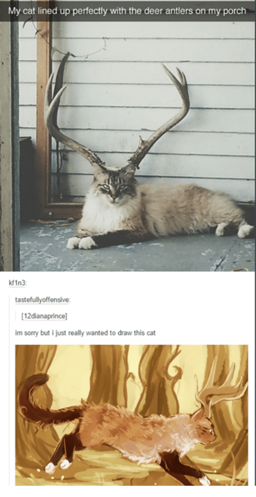 Lined: My cat lined up perfectly with the deer antlers on my porch  kf1n3  tastefullyoffensive:  12dianaprince]  im sorry but i just really wanted to draw this cat