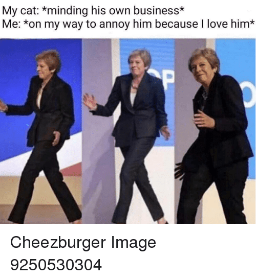 cheezburger: My cat: *minding his own business*  Me: *on my way to annoy him because I love him* Cheezburger Image 9250530304