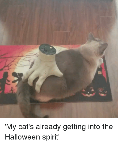 Cats, Halloween, and Memes: 'My cat's already getting into the Halloween spirit'