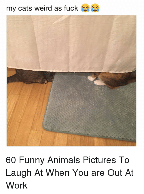 Animals, Cats, and Funny: my cats weird as fuck 60 Funny Animals Pictures To Laugh At When You are Out At Work